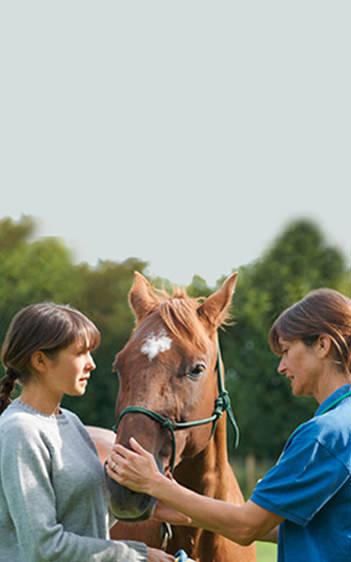 Tierärzte bei Horsia betreuen braunes Pferd