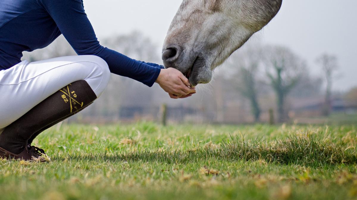 Bildausschnitt von Frau in Hocke, die Pferd aus Händen fressen lässt