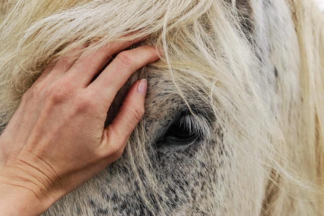Das Besondere an alten Pferden Header – Horsia Ratgeber