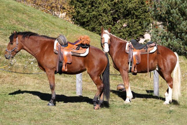 Urlaub? Nicht ohne mein Pferd – Horsia Ratgeber