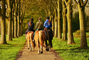 Ausritt gemeinsam mit Pferd durch den Wald – Horsia Ratgeber