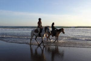 Ausritt mit Pferden am Strand – Horsia Ratgeber