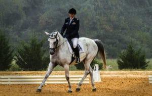 Pferd und Reiter während der klassisch-englische Reitweise – Horsia Ratgeber