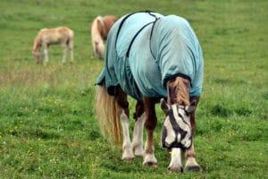 Pferd mit Fliegendecke und Fliegenhaube auf der Weide – Horsia Ratgeber