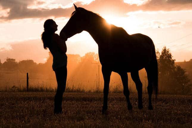 Ein schöner Sommer mit Ihrem Pferd: Tipps gegen Hitze und Insekten – Horsia Ratgeber
