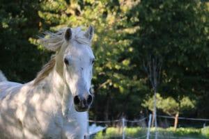 Pferd auf der Weide im Sommer – Horsia Ratgeber