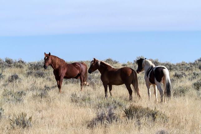 Was Sie von Wildpferden über Ihr Pferd lernen können – Horsia Ratgeber