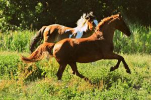 Ein schreckhaftes Pferd hat einen ausgeprägten Fluchtinstinkt – Horsia Ratgeber